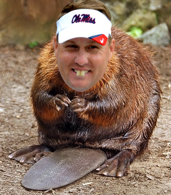 OM12 the best ole miss memes heading into the 2016 season