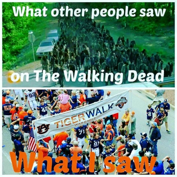 WD Tiger Walk MEME