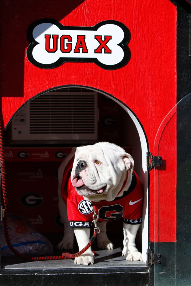 in mascots  best SEC National Day: the dog has the The Dog